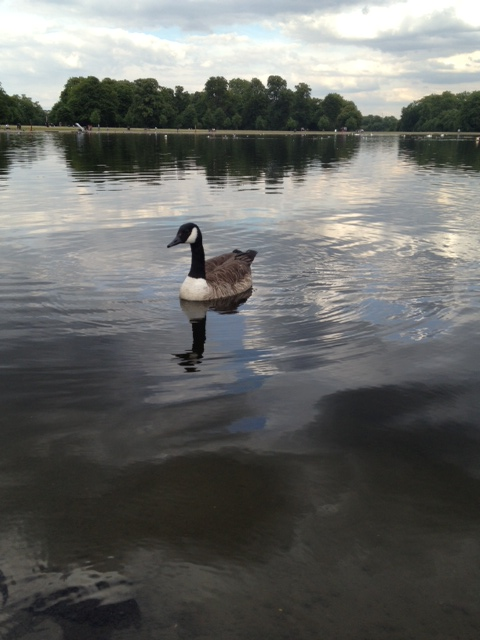 Round Pond - Kensington Gardens, Londra
