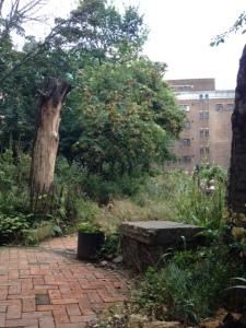 Phoenix Garden, Londra