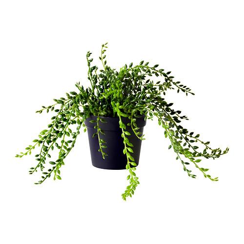 fejka-pianta-artificiale__0134804_PE291516_S4