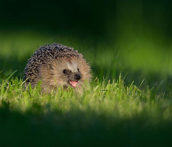 cute-smiling-animals-5