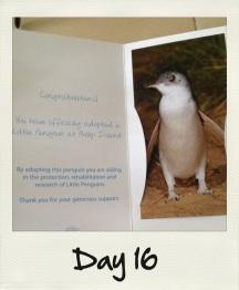 Ho adottato un pinguino :)